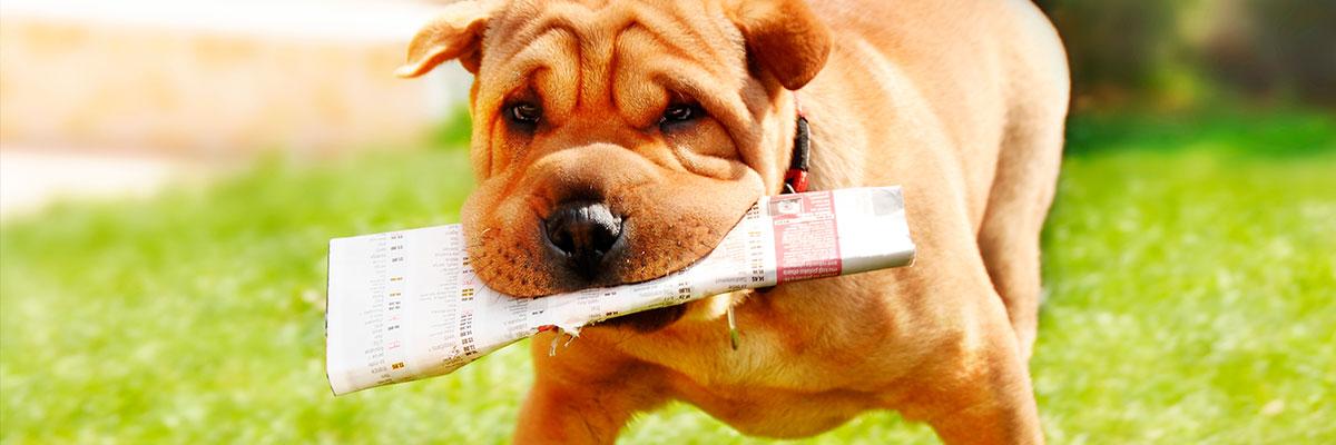 En reklameavis låste tænderne sammen på hunden Jokke