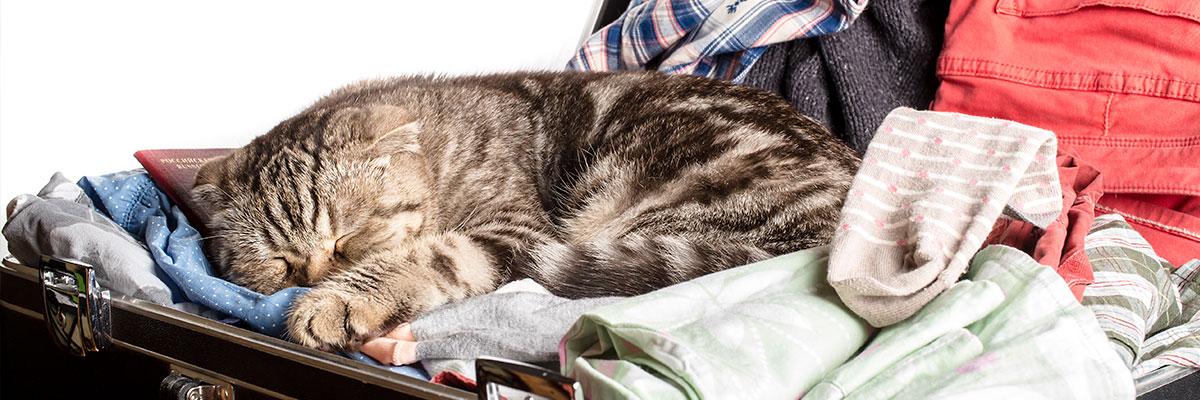 Rejsepas og rabies-vaccination før rejse med kæledyr